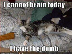 lolcat-brain-today-415